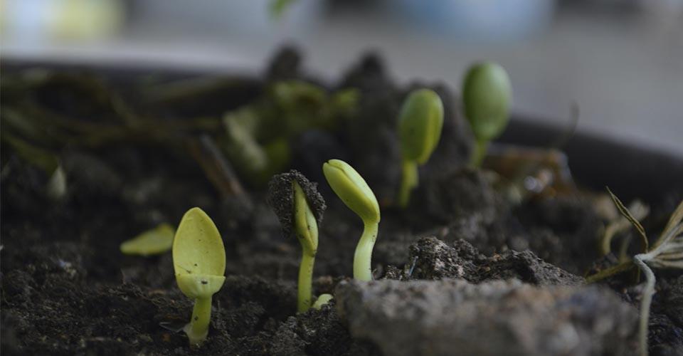 plantas creciendo en tierra