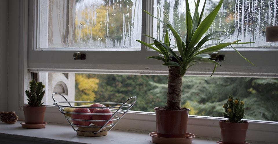 Plantas en una ventana abierta de cocina